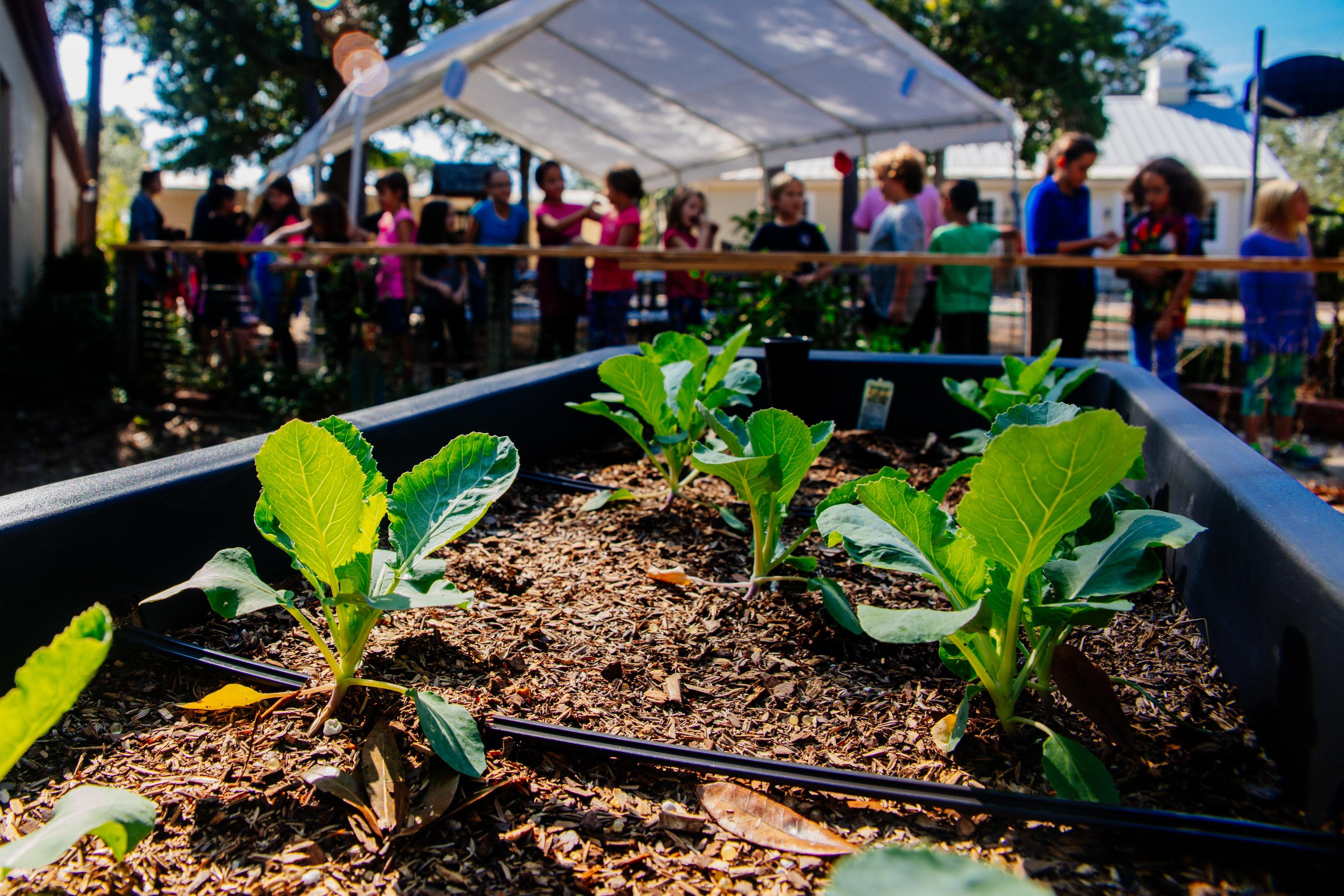 Elementary students overlooking MSP's Montessori Drive Campus garden