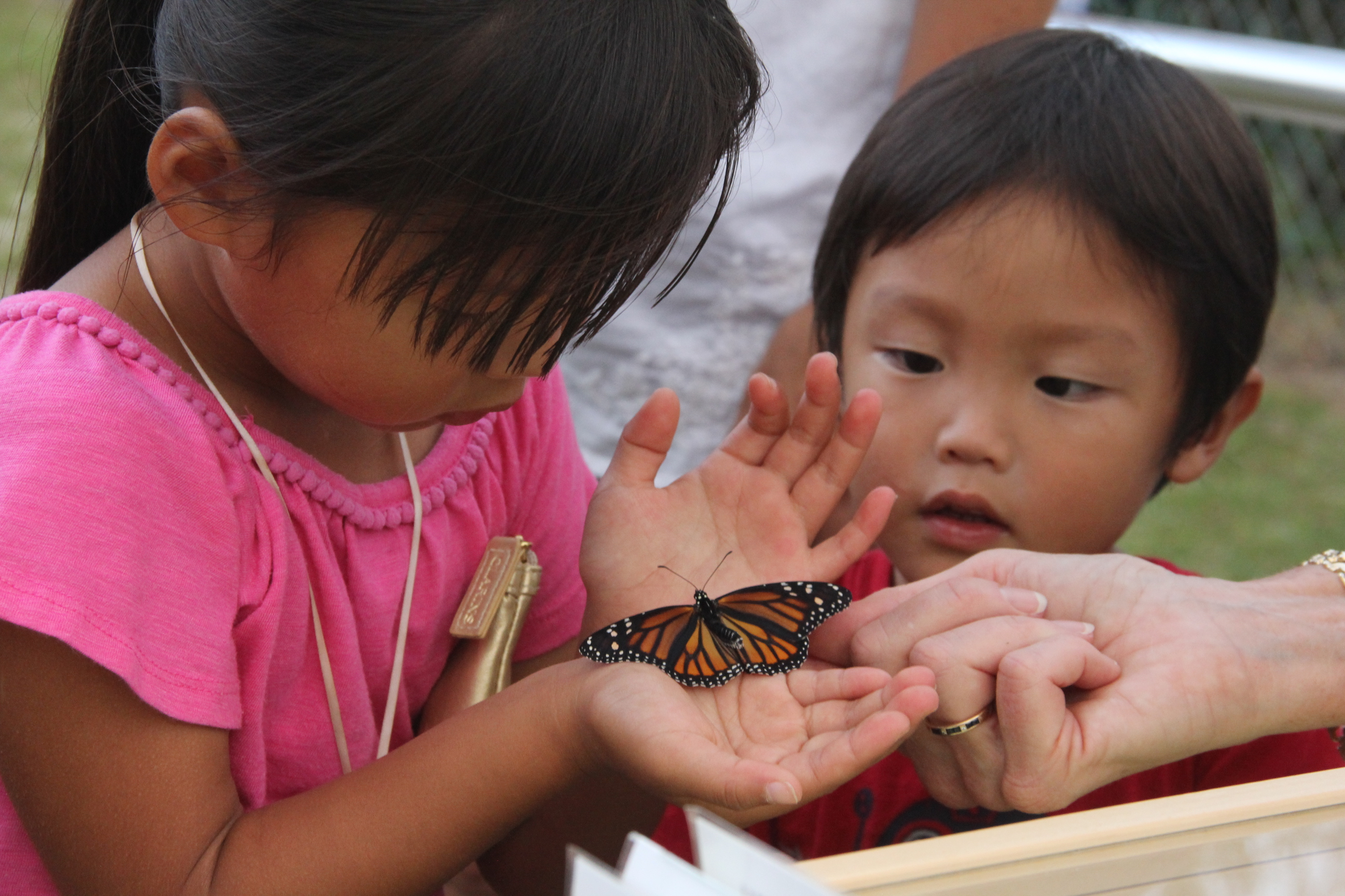 MSP student holding a Newbill Butterfly at family night with her brother