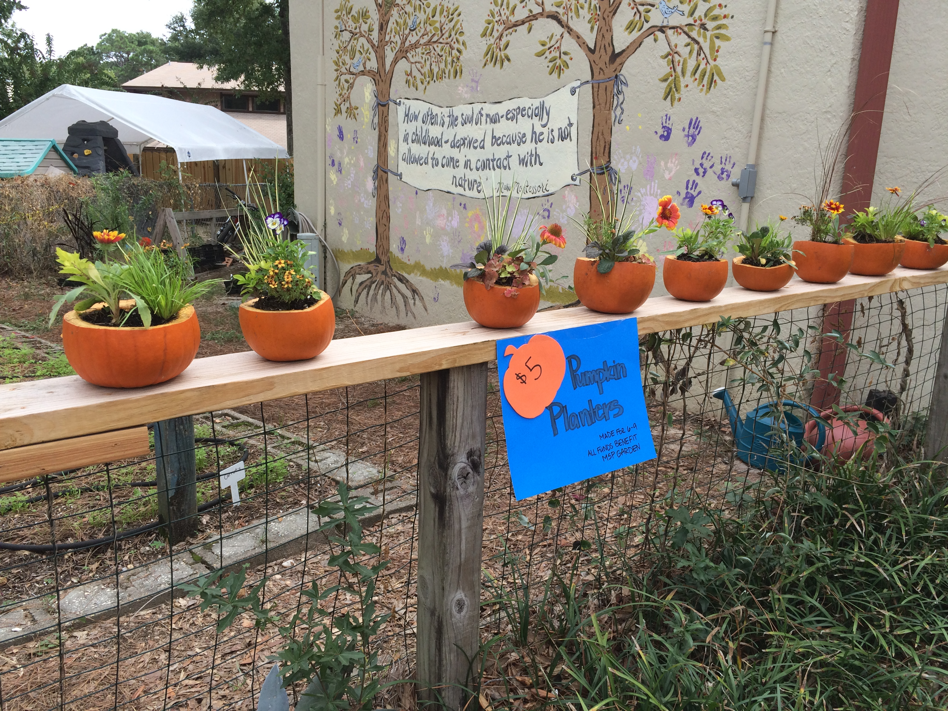 MSP's pumpkin planters for sale in the garden at the Fall Festival